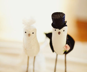 birds, decor, and weddings image