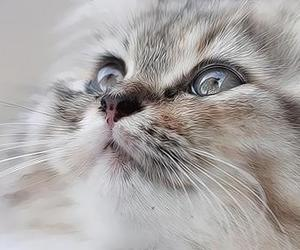 animals, background, and cats image