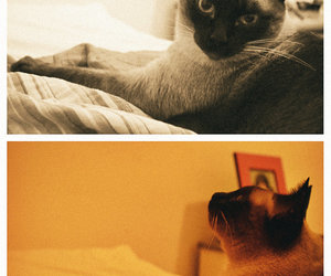 cat, indie, and meow image