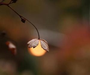 light and sun image