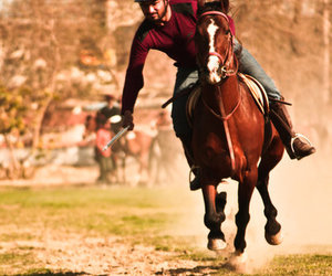 gallop, horses, and pakistan image