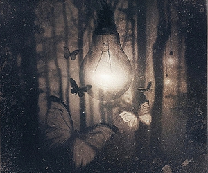 butterfly, light, and black and white image
