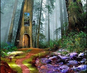 beautiful, forest home, and fae image
