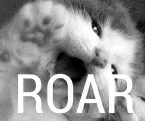 black and white, roar, and cat image