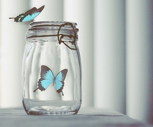 blue, butterflies, and glass image