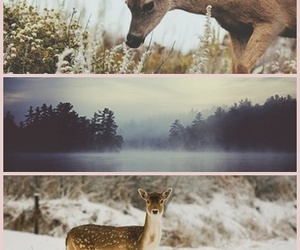 deer, love, and nature image
