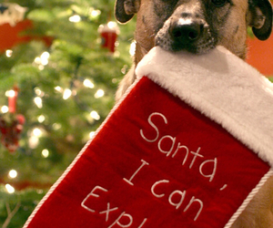 dog, christmas, and santa image