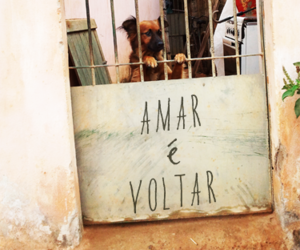 dog, love, and amar image