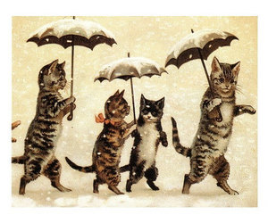 cat, umbrella, and vintage image
