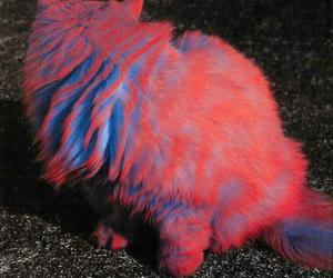 cat, blue, and pink image