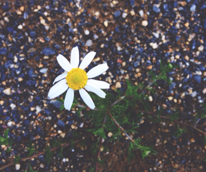 flower, lonely, and summer image
