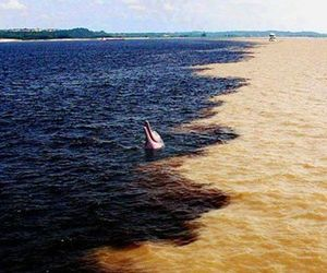 amazon river, dolphin, and nature image