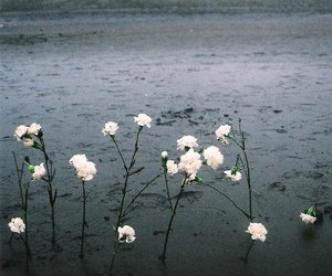 flowers, nature, and grunge image