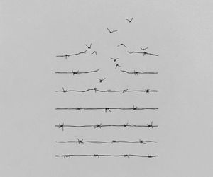 bird, free, and freedom image