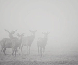 pale, deer, and grunge image