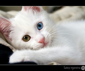 blue and green, cat, and eyes image