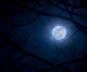 Darkness, forest, and full moon image
