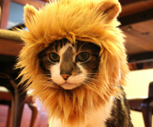 cat, lion, and kitten image