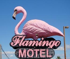 flamingo, hotel, and travel image