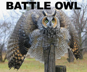battle and owl image