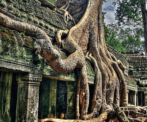 nature and angkor wat image