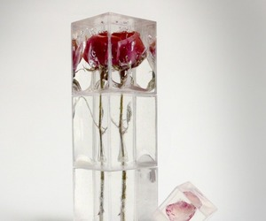 flowers, ice, and rose image