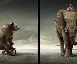 elephant, bear, and circus image