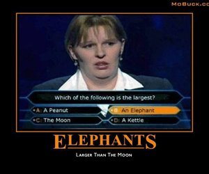 elephant, loser, and question image