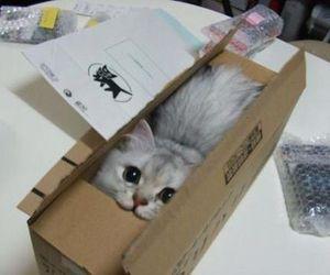 cat, cute, and box image