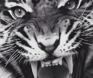 inspiration, tiger, and love image