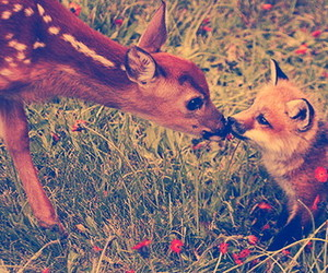 I Love You, what does the fox say, and awwwwwh image