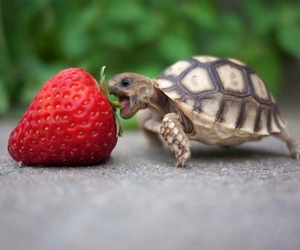 strawberry, turtle, and cute image