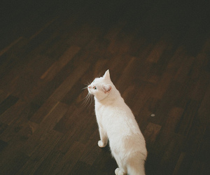cat, animal, and vintage image