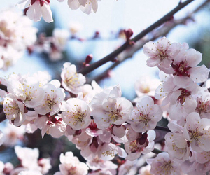 beautiful, spring, and flowers image