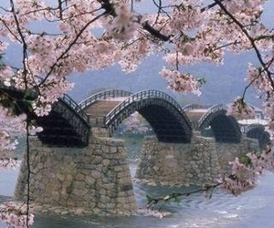 japan, bridge, and nature image