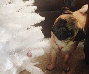pug, christmas, and dog image
