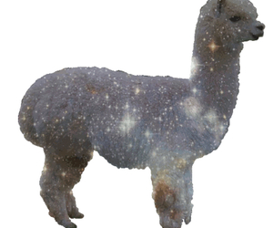 galaxy, llama, and tumblr image