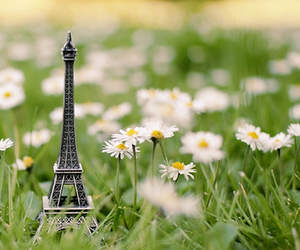 eiffel tower, flowers, and garden image