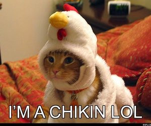 lol, cat, and Chicken image