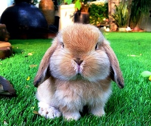 bunnies and supercute image