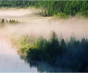 fog, forest, and water image