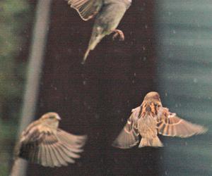 animals, birds, and Dream image