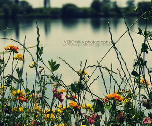 flowers, nice, and photography image