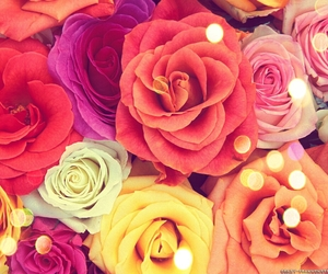 rose, flowers, and colors image