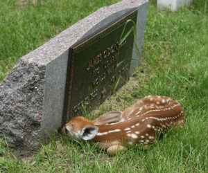 deer and grave image