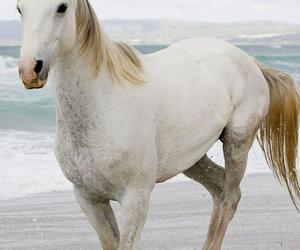 beach, horse, and white image