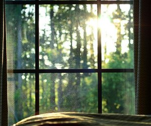 window, sun, and nature image