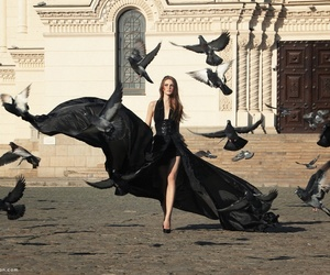 black, model, and bird image