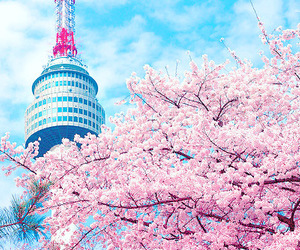 korea, flowers, and pink image