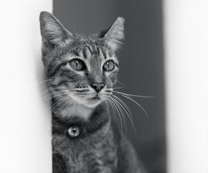 :3, black and white, and cat image